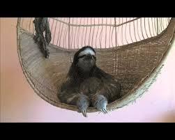 Sloth Meme Generator - fortune cookie sloth meme template gif on imgur