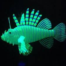 Aquarium Decorations Cheap Best 25 Cheap Aquariums Ideas On Pinterest Beach Bedroom Decor