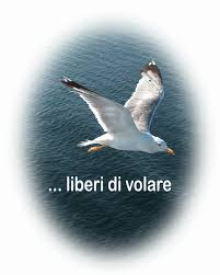 il gabbiano jonathan livingston il gabbiano jonathan livingston con le mie parole trool it