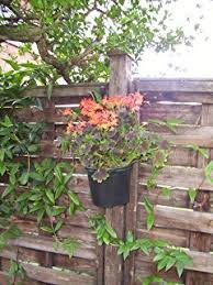 Plant Delivery Plant Pot Holder Pack Of Five Super Save Free Delivery British