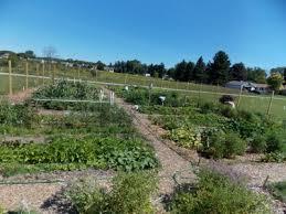 village of lexington community garden