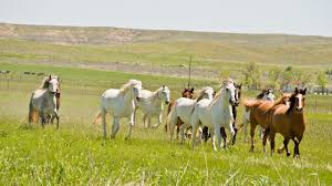 Wyoming travel management company images Wild horses in wyoming travel wyoming that 39 s wy jpg