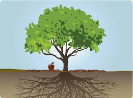 trees absorb odors and pollutant gases filter particulates out of