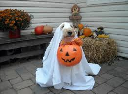 Ghost Dog Halloween Costumes Goldendoodle Extremely Trained Sit