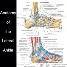 Calcaneus Anatomy 234 Best Anatomy Images On Pinterest Human Anatomy Anatomy And
