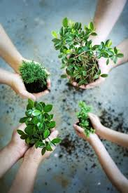 greening indoor mcgill initiative