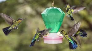 Jewel Box Window Hummingbird Feeder Hummingbird Feeder Reviews U2013 Buttons And Bird Cages