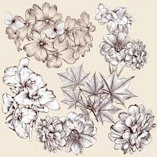 sketched flowers collection vector premium download