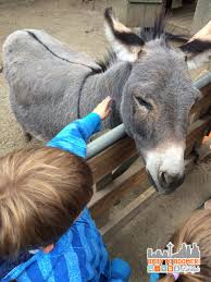 things to do with kids in seattle feed a kangaroo
