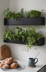 Interior Garden Plants 155 Best Plants Images On Pinterest Flowers Plants And Gardening