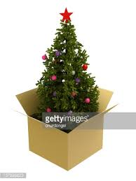 tree in a box stock photo getty images