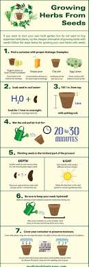 herb growing chart anyone can grow herbs with this super helpful chart herbs herbs
