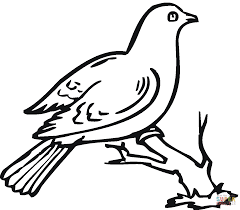 doves coloring pages free coloring pages