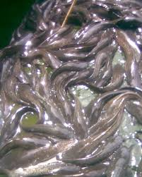 how to start a commercial fish farming business in nigeria fish