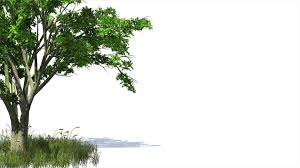 free hd backgrounds 3d animated tree and grass with wind