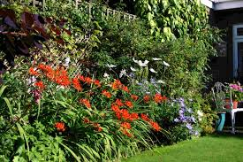 cottage garden flowers english borders throughout cottage garden border ideas