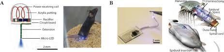 toward biomaterial based implantable photonic devices nanophotonics