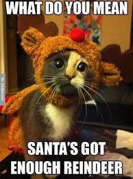Bolvar Fordragon Meme - cute christmas cat meme picture jpg