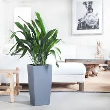 Beautiful Indoor Plants Indoor Plants Nyc Office And House Plant Delivery Service In New