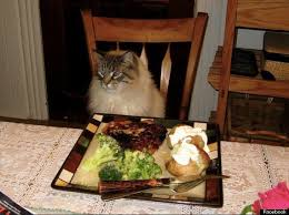 canadian thanksgiving pet photos dogs and cats join in on turkey dinner