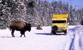 Montana wildlife tours images Bozeman montana snow coach winter tours alltrips jpg