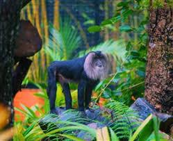 Rockhton Botanic Gardens And Zoo The Rockhton Zoo Accommodation Qld