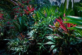 hawaiian tropical garden scenery noel morata photography