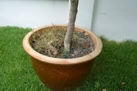 how to control weeds malaysia greenpestscontrol com