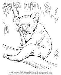 printable zoo animal coloring pages 383 best coloring animals images on pinterest coloring books