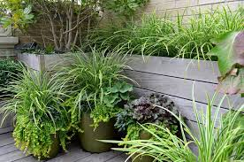 Potted Plants For Patio Plant Pot Ideas For The Patio Landscape Modern With Turf Garden