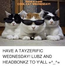Cool Cat Meme - have a super cool cat wednesday have a tayzerific wednesday lubz