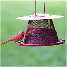 no no cardinal wild bird feeder with lyric black oil sunflower