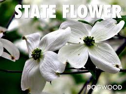 nc flower flower inspiration