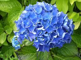 Best Shades Of Blue Names Of Blue Flowers Magiel Info Flower Ideas