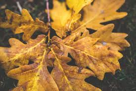 autumn bright color coloring descending environment fall