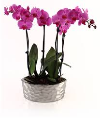 orchids care orchid planter care just add orchids orchids care