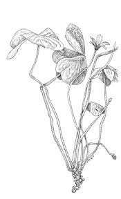 irish native plants blog aislinn adams