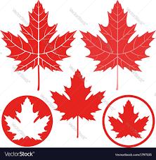 maple leaf royalty free vector image vectorstock