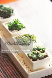 pots cuisine d oration decorative plant pot cover with pebbles cactus plant stock photo