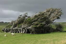 Trees Worldwide Magicandmud One Of The Most Sensational Trees Worldwide