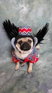 small dog witch costume flying monkey dog costume okay this is just beyond cute i want