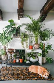 indoor plants that need little light plant hearty indoor plants amazing hardy indoor plants low light