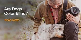 Are All Dogs Colour Blind Amazon Com Pet Content Dog Main Pet Content Main Pet
