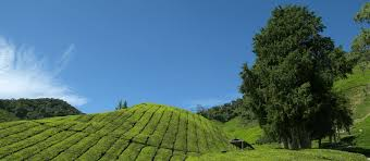 exclusive travel tips for your destination cameron highlands in