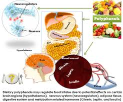 polyphenols in your diet may regulate food intake role of dietary