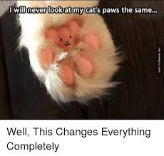 This Changes Everything Meme - willnever look at my cat s paws the same well this changes