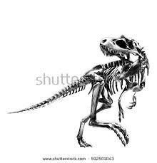dinosaur skeleton tyrannosaurus bone black white stock vector