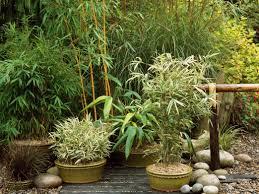 amusing container garden designlans uk ideas for shade fallhotos