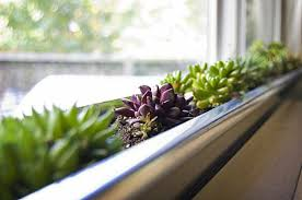 Indoor Gardening Ideas Design Ideas Modern Succluent Windowbox Planter Indoor