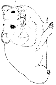 Coloriages Hamster  Les animaux